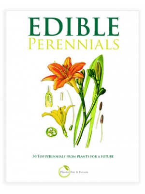 perennial_cover_ebook